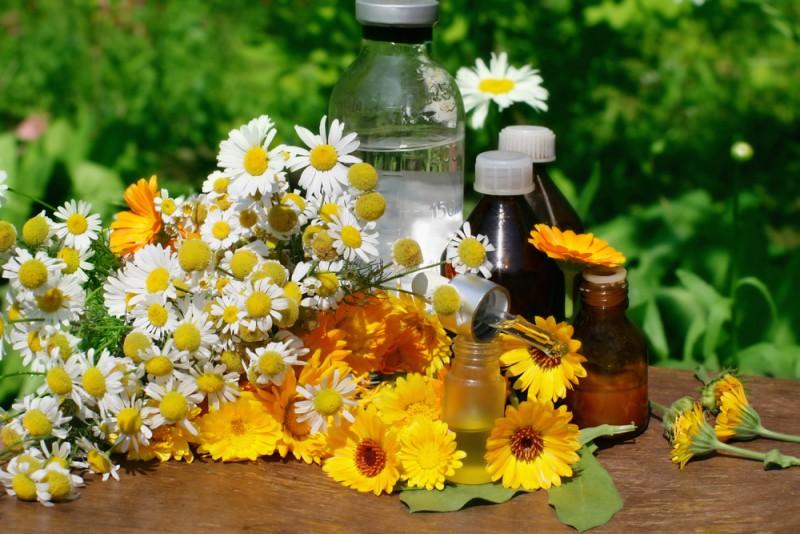 Sunt eficiente plantele medicinale?