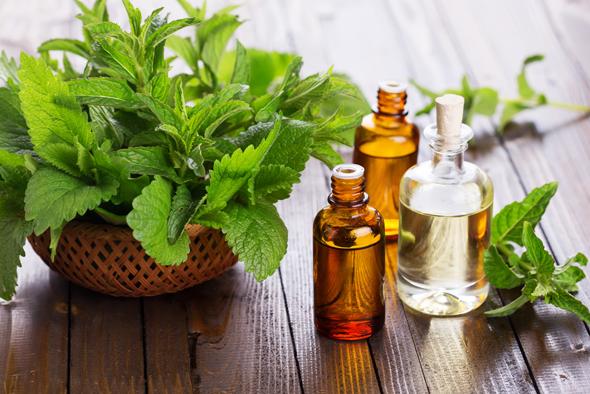 Beneficiile si utilizarile uleiului esential de menta
