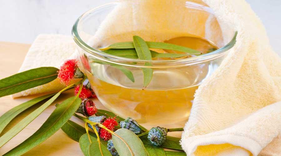 Beneficiile pentru sanatate ale uleiului de eucalipt